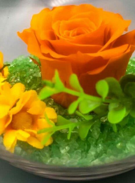 orange rose 2