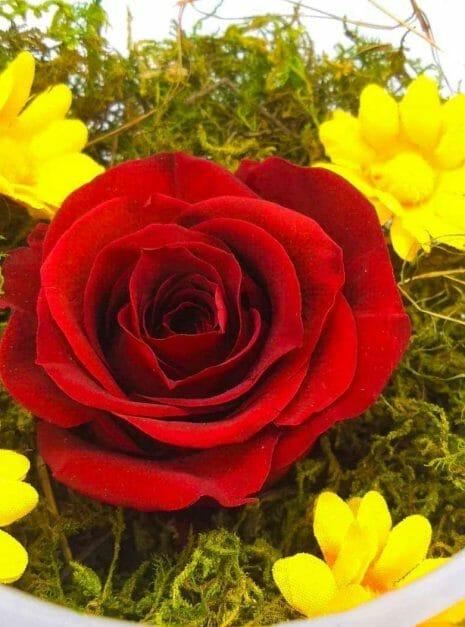 red rose melany flower shop 1 (2)