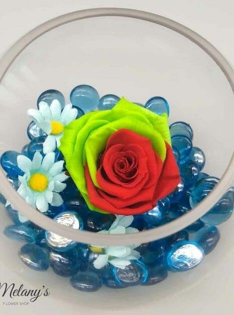 rosa roja y vrede sobre azul (1)