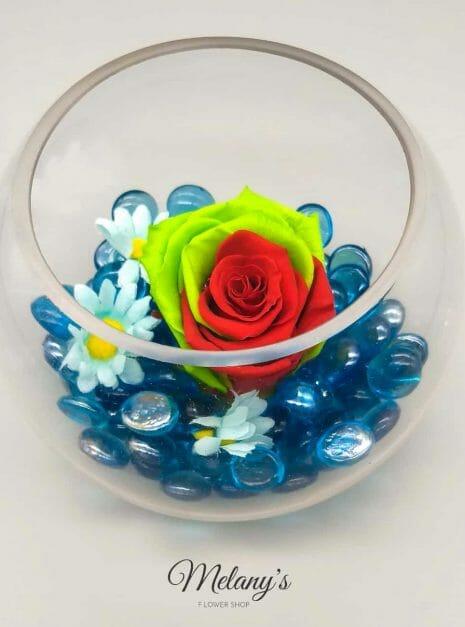 rosa roja y vrede sobre azul (2)