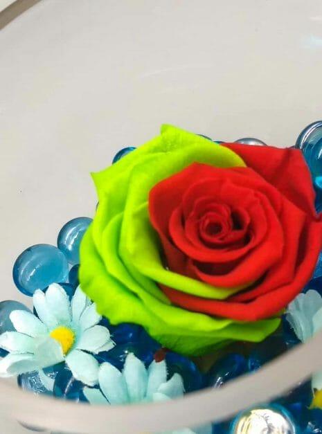 rosa roja y vrede sobre azul (3)
