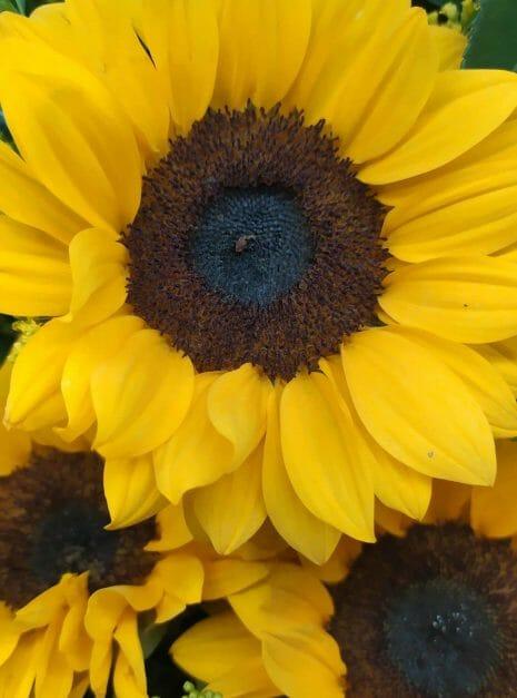 Love in yellow - Rosas amarillas en el salvador - Melany flower Shop
